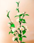 Цветы из гофрированной бумаги для начинающих (28)