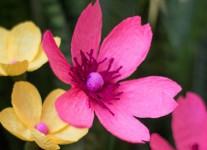 Как сделать цветы из гофрированной бумаги (10)