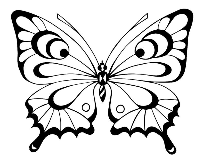 картинки бабочка раскраски