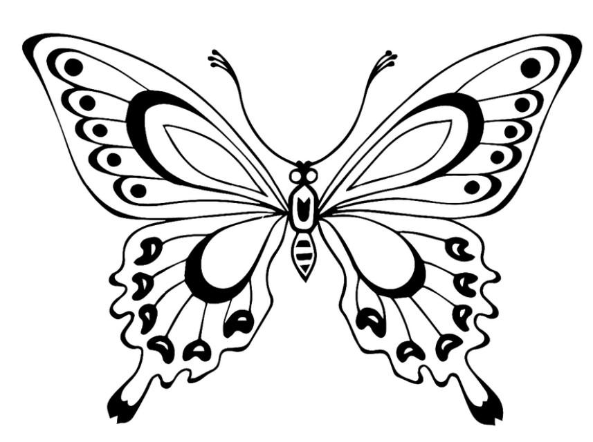 Бабочки картинки своими руками шаблоны