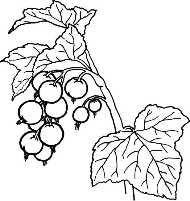 Раскраски фрукты