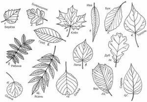 Раскраска осень (5)
