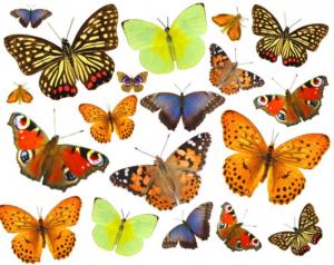 Бабочки из бумаги своими руками (30)
