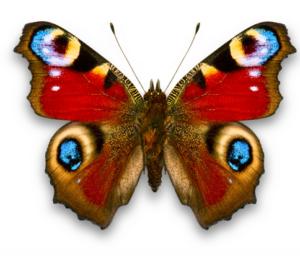 Бабочки из бумаги своими руками (35)