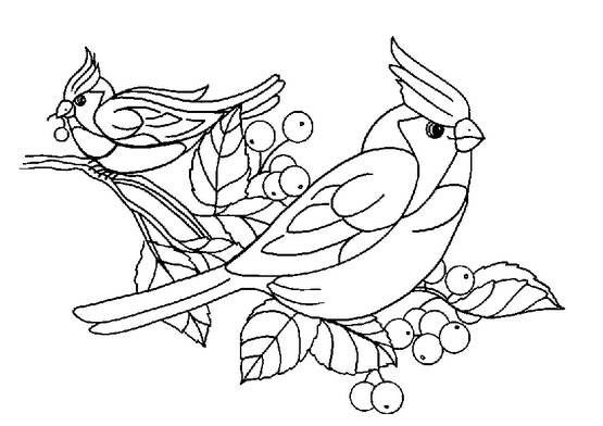 Картинки дятел птица