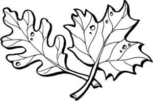 Осенние вытыканки