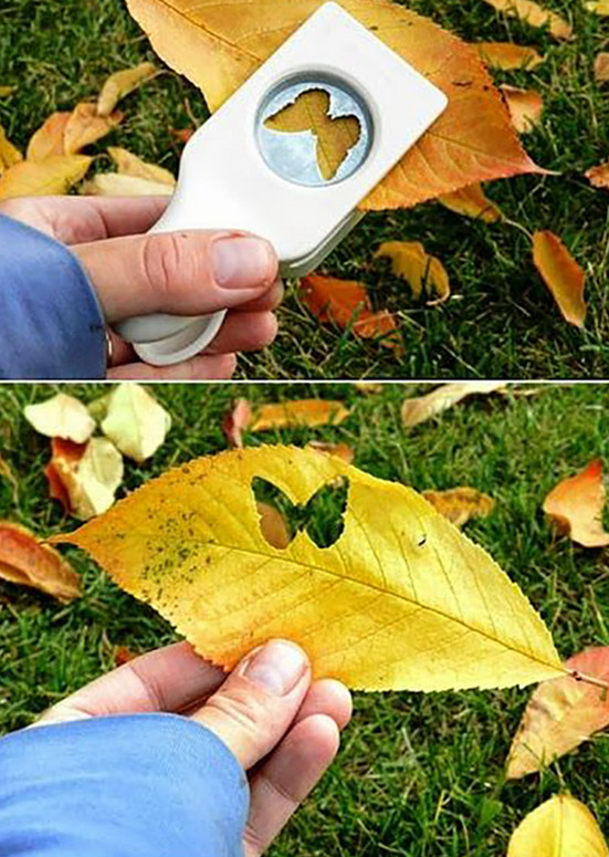 Теперь по дороге домой я собираю осенние листья и желуди.... Увидев результат, ты станешь поступать так же!