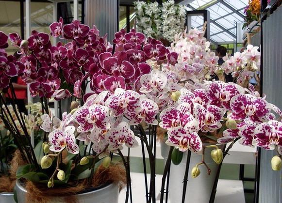 Секреты рассадки орхидей: как 1 растение превратить 100!