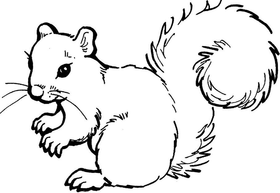 Картинки для животных для печати черно белые