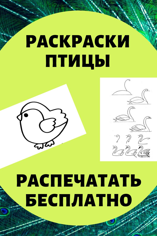 Раскраски птицы. Картинки распечатать бесплатно.