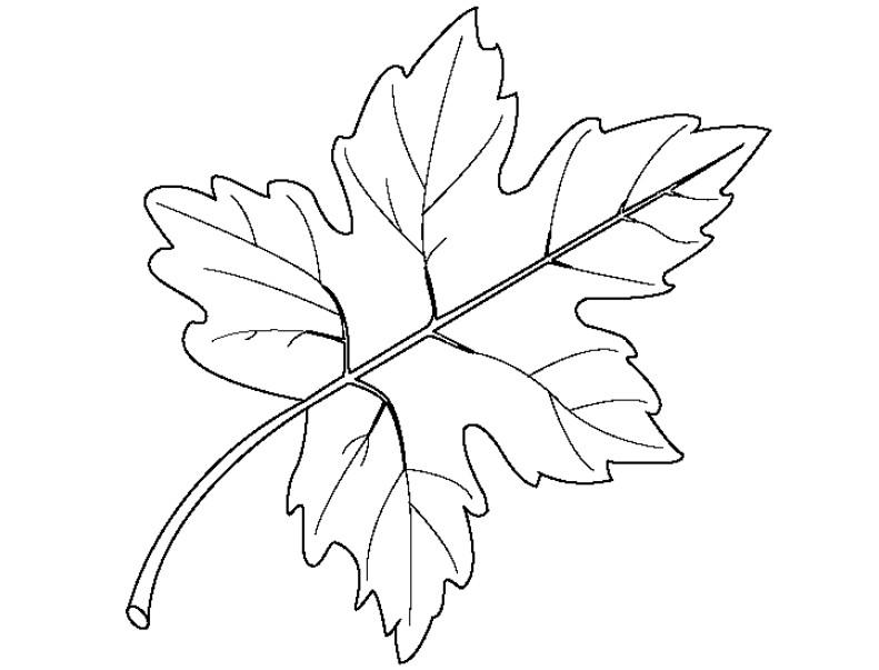 Шаблоны осенний лист, сердечко