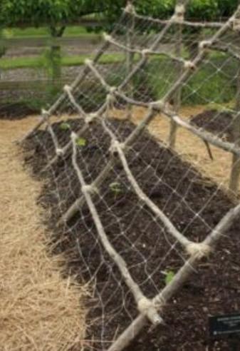 Секретный прием выращивания грунтовых огурцов: урожайность больше, а усилий меньше...
