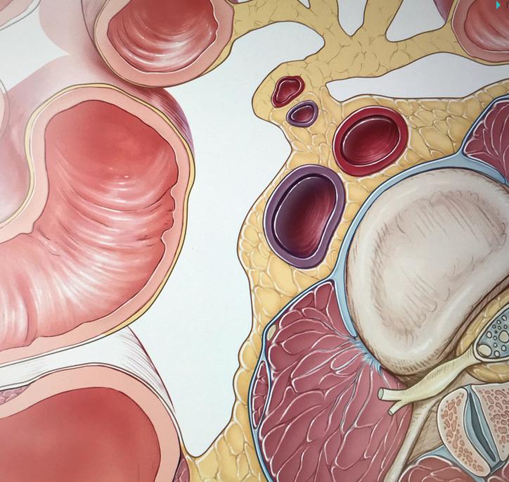 Большинство проблем со здоровьем начинается в кишечнике